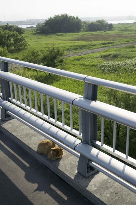 石狩河口橋にいたネコ