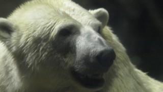 夜の旭山動物園と、旭川の夜景を楽しめる嵐山展望台に感動