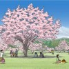札幌に桜の新名所が誕生!札幌市南区小金湯「さくらの森」でお花見だ!