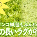 [100均]ペタンコ絨毯もふんわり復活?毛足の長いラグも新品同様に!