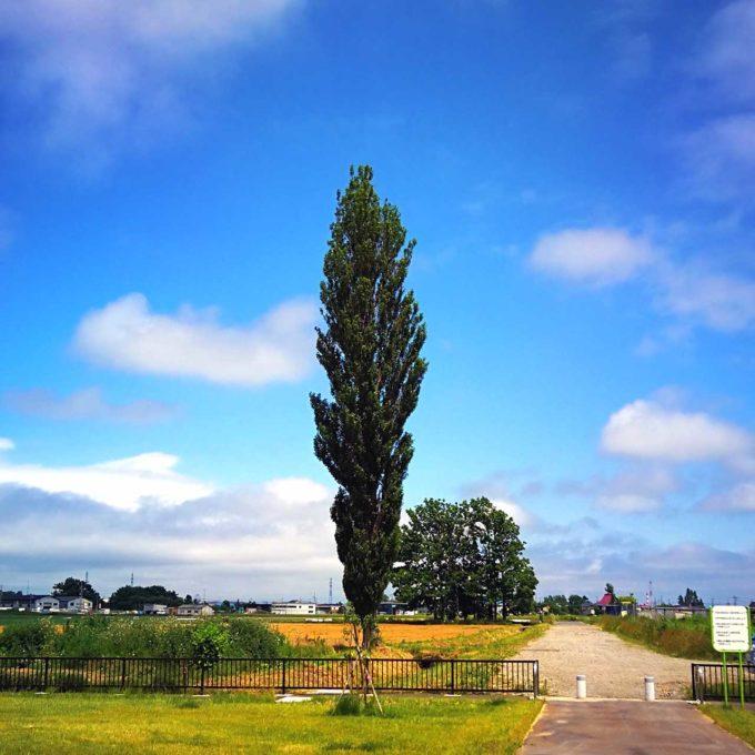 ランニングコース途中にある大きな木